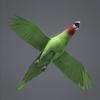 01 34 15 866 parrotwild 05 4