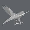 01 34 16 332 parrotwild 08 4