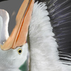 01 34 18 506 pelican 09 4