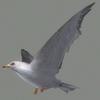 01 34 25 685 seagull hi 01 4