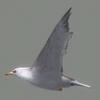 01 34 25 947 seagull hi 02 4