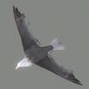 01 34 26 190 seagull hi 03 4