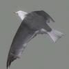 01 34 26 446 seagull hi 04 4