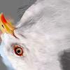 01 34 27 743 seagull hi 10 4