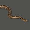 01 34 35 638 snake 02 4