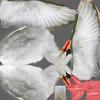 01 34 47 8 swan 15 4