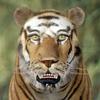01 34 49 679 tiger 01 4