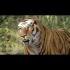 01 34 50 198 tiger 04 4