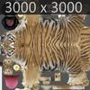 01 34 50 490 tiger 07 4