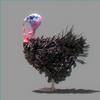 01 34 57 525 turkey 01 4