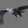 01 35 00 196 vulture white 0001 4