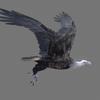 01 35 00 299 vulture white 0002 4