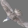 01 35 00 675 vulture white 0004 4