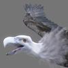 01 35 00 73 vulture white 0000 4