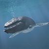 01 35 01 901 whale 01 4