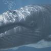 01 35 04 309 whale 04 4