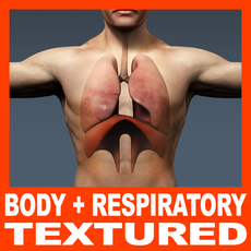 Human Male Body and Respiratory System Textured - Anatomy 3D Model