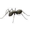 01 40 24 491 ant5wires 4