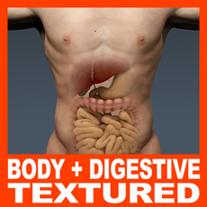 Human Male Body and Digestive System Textured - Anatomy 3D Model