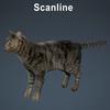 01 56 58 843 cat hair 01 4