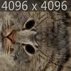 01 56 59 373 cat texture 4