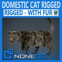 Rigged Domestic Cat 3D Model