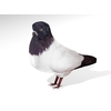 02 10 23 740 dove1 4
