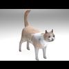 02 13 12 274 cat2 4