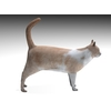 02 13 12 384 cat3 4