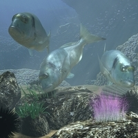 Sea Bream Fish Rigged with Underwater Scene 3D Model