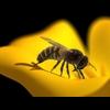 02 14 15 178 bee 4