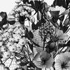 02 19 20 536 bouquet9 6 4
