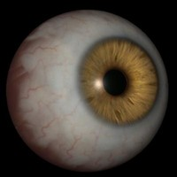 human brown eye 3D Model