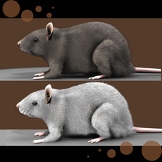 Mouse with fur 3D Model