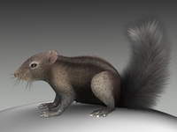 Squirrel 3D Model