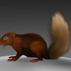 Squirrel brown 3D Model