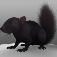 Squirrel black 3D Model