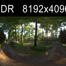 Forest 1 HDRI Environment (High resolution)