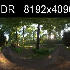 Forest 1 HDRI Environment (High resolution)
