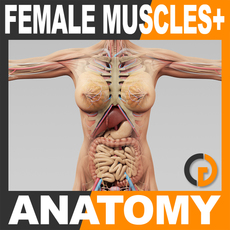 Human Female Anatomy - Body, Muscles, Skeleton and Internal Organs 3D Model