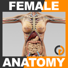 Human Female Anatomy - Body, Skeleton and Internal Organs 3D Model