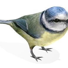 Nightingale 3D Model