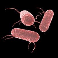 Salmonella Bacteria 3D Model