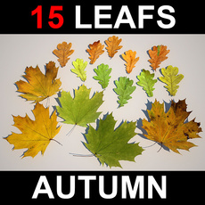 Leaf Collection 3D Model