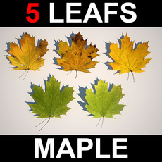 5 Maple Leafs 3D Model