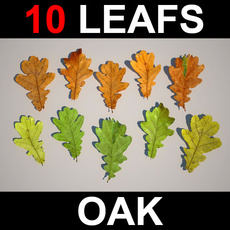 10 Oak Leafs  3D Model