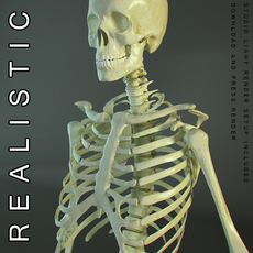HD Skeleton of a Human 3D Model
