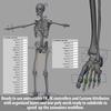 03 03 28 368 skeletonmayarigged th002 4