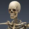 03 03 28 459 skeletonmayarigged th003 4