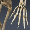 03 03 28 894 skeletonmayarigged th008 4